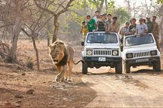 Do you wish to see various species of wild creatures from a close distance in #Gir? If yes, then try #jeepsafari.