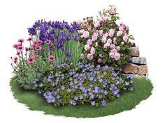 Iris-Paket 'Endlose Blütenfreude' Edle Schönheiten: Spieglein, Spieglein auf dem Weg, wer ist die Schönste in diesem Beet? Für Liebhaber kühler...