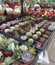 Mini succulents & cacti are here!! #cactus #succulents #PenfieldNY