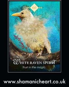 The best and most intuitive decks created by a master on Oracle Cards, Colette studied many ancient divination systems to create these super accurate decks. Animal Meanings, Animal Symbolism, Animal Spirit Guides, Animal Medicine, Oracle Tarot, Animal Totems, Tarot Decks, Angel Cards, American Women