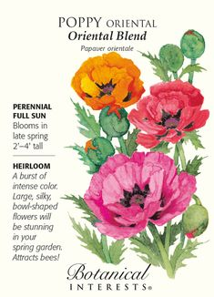 Perennial in USDA zones 1-6. (Grown as an annual in USDA zone 7 and warmer.) Mix these tall, beautiful poppies with other spring and fall blooming flowers, and watch your garden come alive with honeyb