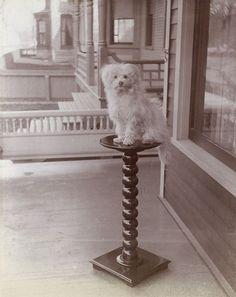 Small Dog on Pedestal
