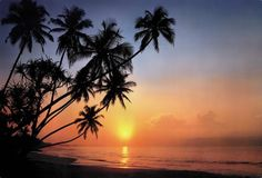 Brewster Tropical Sunset 8 Panel Mural with Paste, by Luxury Wallpaper, Of Wallpaper, Photo Mural, Sr1, Modern Outdoor Furniture, Inspirational Wallpapers, Maldives, Panel, Palm Beach