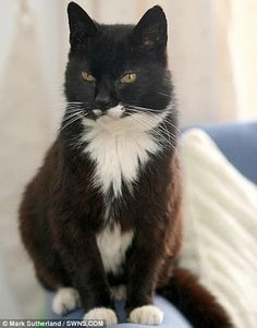 The oldest cat ever lived is Creme Puff who was born on August 3, 1967. Creme Puff's owner, Jake Perry in Austin, Texas, USA.     Creme Puff (August 3, 1967 – August 6, 2005), was a female cat who died at age 38 years and 3 days. She was the oldest cat ever recorded, according to the 2010 edition of Guinness World Records