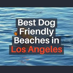 Best Dog Friendly Beaches in Los Angeles California. A best dog beach will certainly offer a safe environment for pet dogs to run, play, swim and also engage with various other pets. The beach is kept clean; pet dog friendly beaches offer supplies for clean up as well as have food and water easily available. While lots of canines prefer off-leash dog beaches, some prefer the safety and security of the leash. #dog #friendly #beach #losangeles #california #pet #dogbeach #safety Places In California, California Travel, Pet Travel Carrier, Dog Beach, Los Angeles California, Dog Memes, Beach Photography, Beach Pictures, Dog Friends