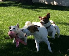 Life & Times of Willy the Kid: Oh the Games Dogs Play!