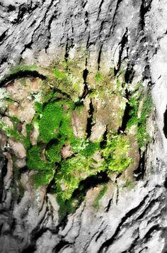 Heart by Birgita Golob-Vurnek