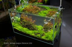 ADA Aquarium - I love these rimless tanks