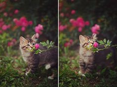 Take time to stop and smell the roses ...