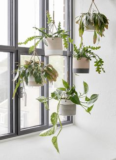 Hanging plants helps create coziness with Hübsch Planters png C. Hanging plants he Hanging Plants, Diy Hanging, Hanging Planters, Interior Plants, Hanging Pots, Hanging Plants Indoor, Green Plants, Indoor Decor, Indoor Plants