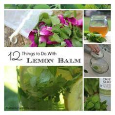 Using Fresh Mint to Make Lip Balms & Salve (3 Recipes)