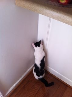 What is so interesting about that corner, Zinnia?