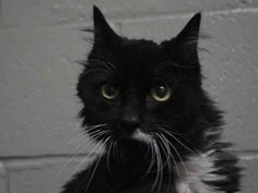 MELODY - A1040188 - - Brooklyn  *** TO BE DESTROYED 07/06/15 *** DO YOU HEAR A MELODY?? Our MELODY is nine years young and a terrific BEGINNER!! She really wants a new home and is at the front of her cage looking for love and petting!! Sadly, the ACC gave her their shelter cold and now they have a reason to list her….BEAT THE ACC AT THEIR OWN GAME AND MAKE BEAUTIFUL MUSIC WITH MELODY TONIGHT!! OFFER TO FOSTER OR ADOPT HER NOW!! -  Click for info & Current Status: ht