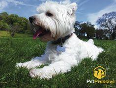National Holidays, Pet Names, Your Pet, Pets, Animals, Names Of Animals, Animales, Tax Day Deals, Animaux