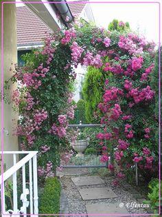 rankhilfe mit wei en rosen am garteneingang rose garden pinterest rosenbogen rose und. Black Bedroom Furniture Sets. Home Design Ideas