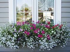 Million Bells & White Lobelia. Flower boxes add so much to a home.