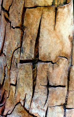 """Patterns in splitting old bark."" by ronsphotos"
