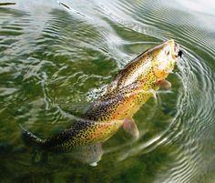 Hooked - San Juan River, NM