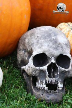 skull replica for sale #skull #skullreplica #bone #skeleton #calavera #tattoo #inked #skullart #photography #instaskulls #metal #grave #shot Calavera Tattoo, Skulls For Sale, Skull Decor, Halloween Skull, Skull And Bones, Skeleton, Metal, Photography, Photograph