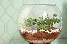 A junção entre a beleza das plantas e a transparência do vidro faz do terrário um jardim com jeito de peça decorativa. Materiais como conchinha, cristal, lasquinhas de madeira e a planta musgo ajudam a compor uma das camadas da pequena estufa.