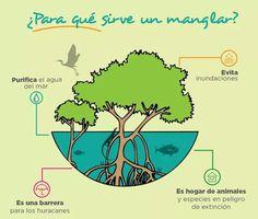 La importancia del manglar