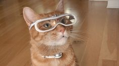 9Lives' Morris the Cat Breaks Long Silence in an Exclusive Interview   Adweek Morris the Cat Talks Brand Endorsements, Naps and How He Really Feels About Grumpy Cat An exclusive interview with the original celebricat By Robert Klara / Oct 2014