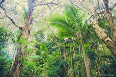 Welcome to the jungle Welcome To The Jungle, Personal Portfolio, My Photos, Australia, Child, Nature, Flowers, Plants, Boys