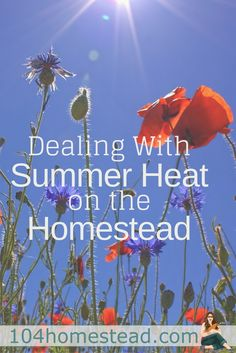 Some of the best stuff on the homestead happens in summer, but summer comes with struggles as well. Here's how to deal with it and…