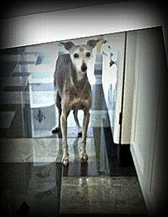 1000+ images about Lost Dogs AZ on Pinterest | Hair ...