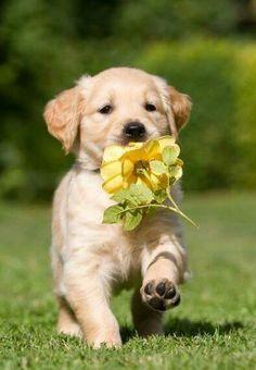 I brought you a flower, Mom!