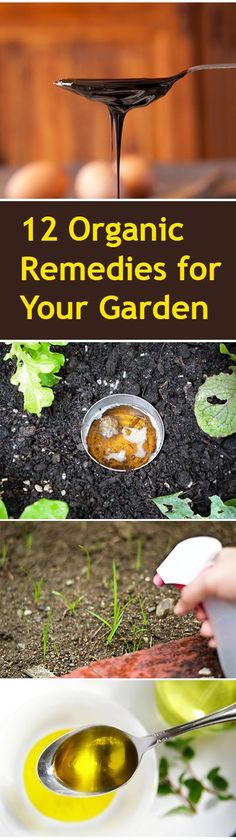 12 Organic Remedies for Your Garden