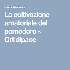 La coltivazione amatoriale del pomodoro «  Ortidipace