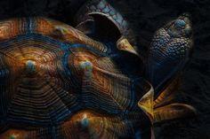 【亀 鱉 Turtle】 エバーグレーズ湿地帯のカメ(米国・フロリダ州)