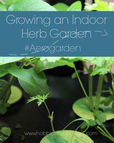 Growing an Indoor Herb Garden #Aerogarden @miraclegro  #sponsored