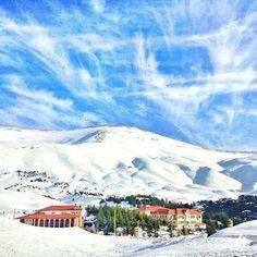 Cedars / lebanon