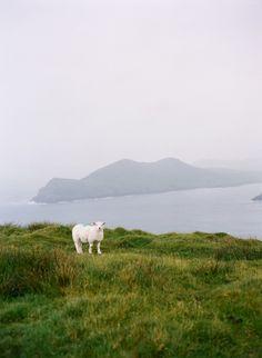 ireland on film » ali harper photography