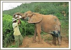 shimba getting more time a day special care and medicine for recovery after simba attack at dswt voi stockade