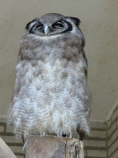 """""""I feel worse now than when I woke up. How is that even possible?""""  Hungoverowls.tumblr.com"""