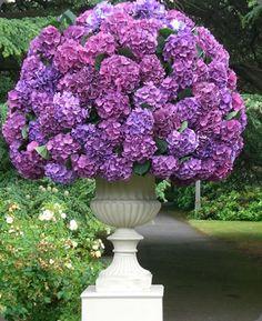,,,,,,magnifique,,,,,,bouquet,,,,,,,**+,Hydrangea arrangement!