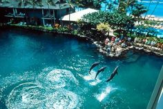Aerial view of the Kahala Dolphins