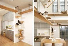 The Plus-Nyan Home acts as a kind of jungle-gym for cats which is intended to keep pets and pet owners happy.