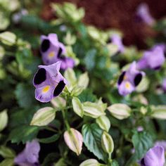 Here are some fun, quirky facts about plants and gardening!