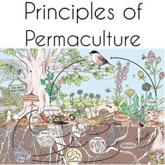 """permaculture-prowess: """" Principle Design from patterns to details By stepping back, we can observe patterns in nature and society. These can form the backbone of our designs, with the details filled in as we go. Every spider's web is unique to its. Permaculture Design, Permaculture Principles, Permaculture Garden, Horticulture, Organic Gardening, Gardening Tips, Vegetable Gardening, Gardening Zones, Forest Garden"""