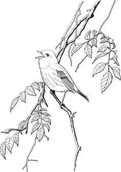 Audubon's Birds of America Coloring Book John James