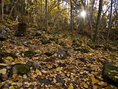 Picture of forest in autumn colors – Ground covered with leaves Forest Falls, Fairy Paintings, Autumn Forest, Sketchbooks, Norway, Concept Art, Art Projects, Landscapes, Rocks