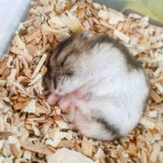 This curled up ball of love: | 16 Tiny Fluffs That Will Warm Even The Coldest…