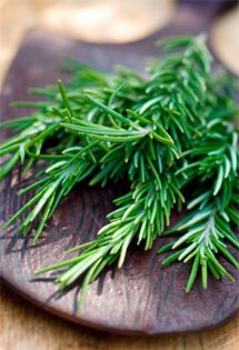 Going Back to School? Herbs that Improve Memory | Holistic Health Herbalist