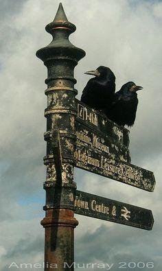 Dark Side, Blackbird Singing, Quoth The Raven, Raven Art, Crow Art, Jackdaw, Arte Obscura, Crows Ravens, Theme Halloween