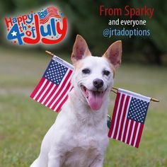 Happy Fourth of July from Sparky and everyone else at Georgia Jack Russell Rescue. #adoptable #dog