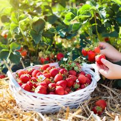 Chocolate And Raspberry Tart, Raspberry Tarts, Chocolate Tarts, Lemon Tarts, Ripe Fruit, Fresh Fruit, Fruit Recipes, Summer Recipes, Pie Recipes